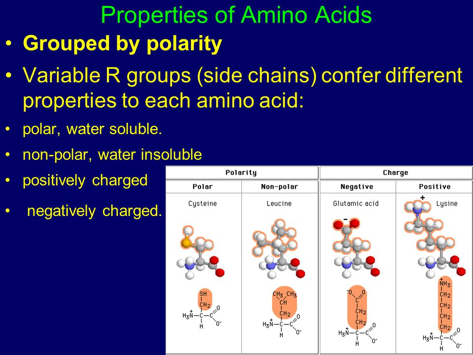 Properties of Amino Acids