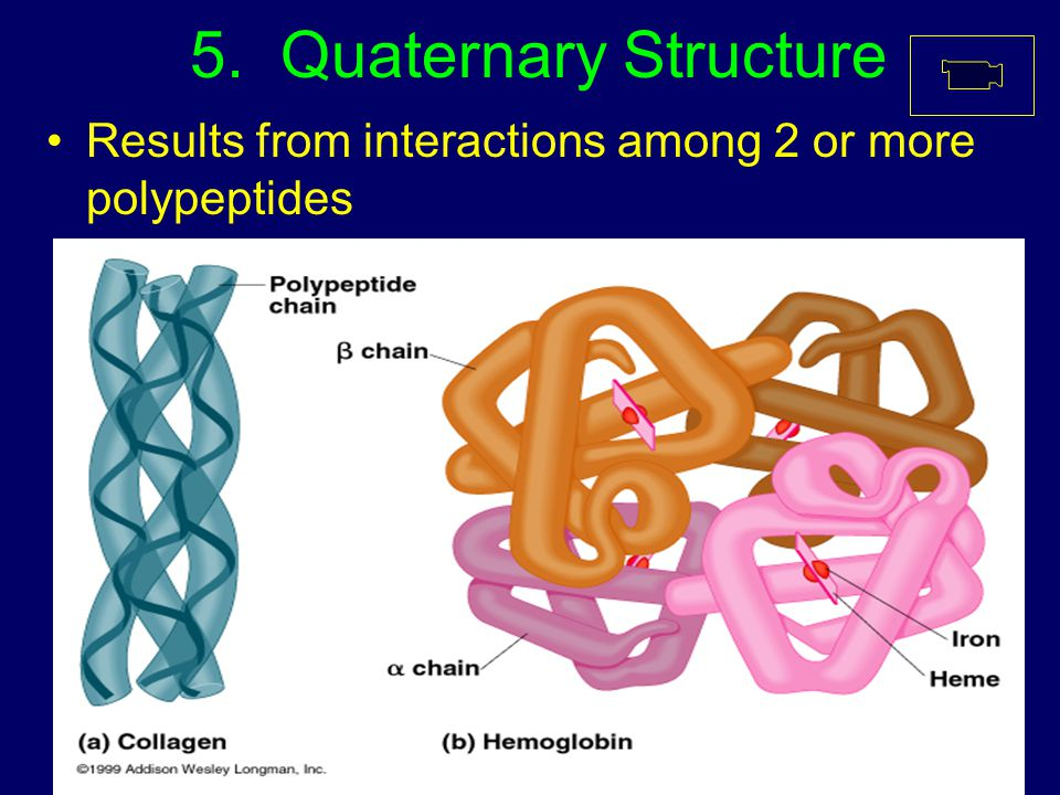 5. Quaternary Structure Results from interactions among 2 or more polypeptides