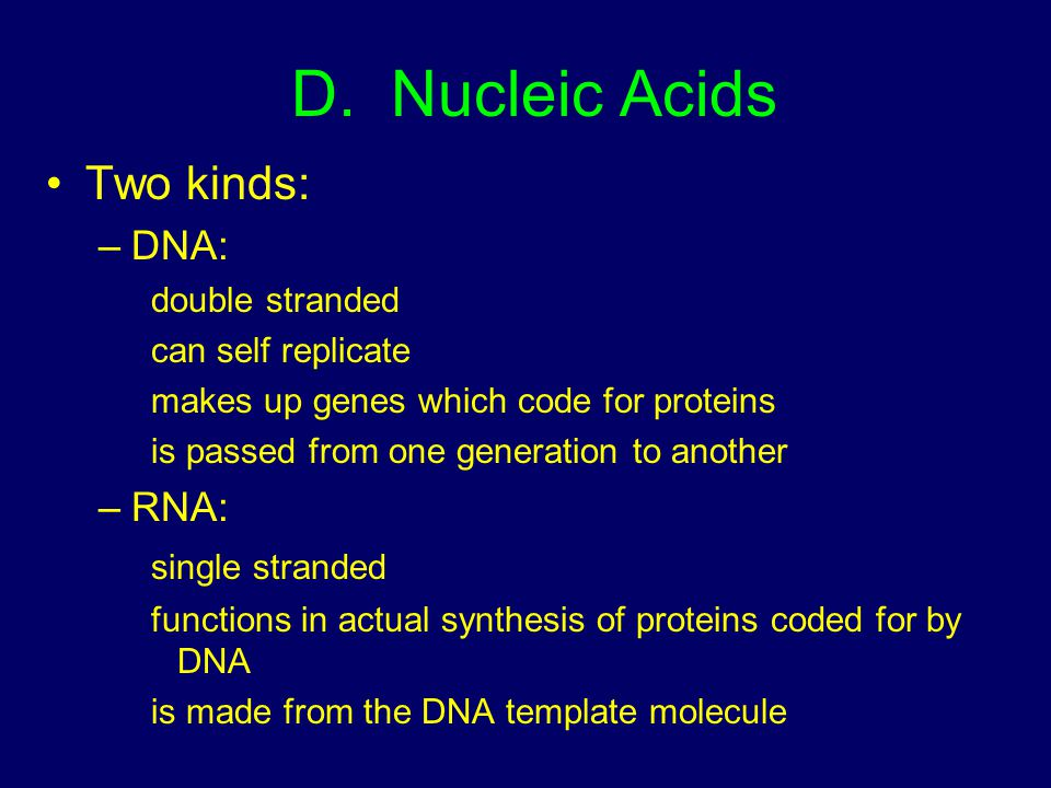 D. Nucleic Acids Two kinds: DNA: RNA: double stranded