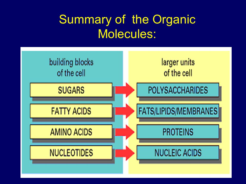 Summary of the Organic Molecules: