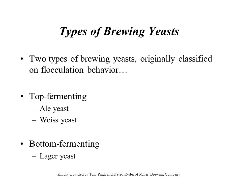 Types of Brewing Yeasts