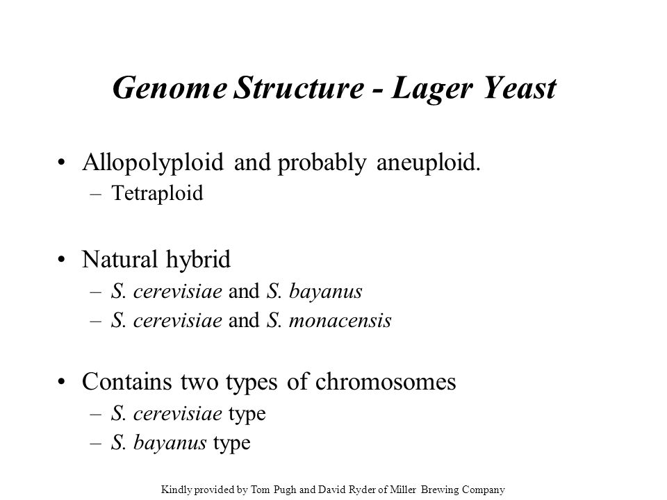 Genome Structure - Lager Yeast
