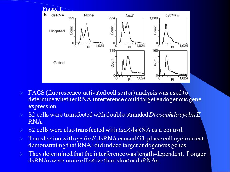 S2 cells were also transfected with lacZ dsRNA as a control.