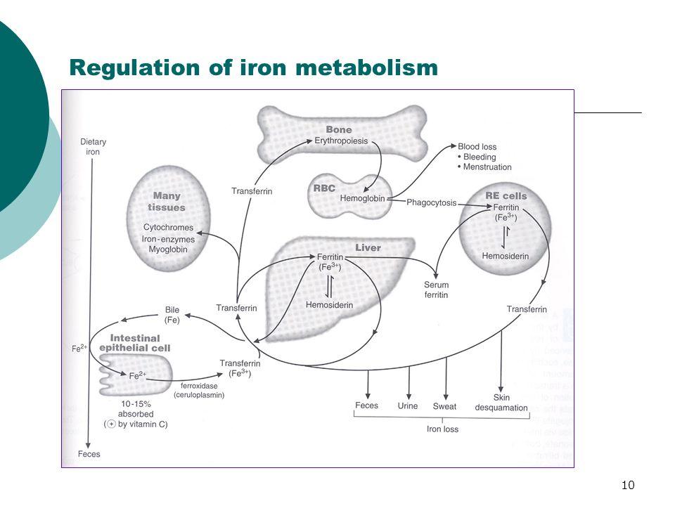 Regulation of iron metabolism