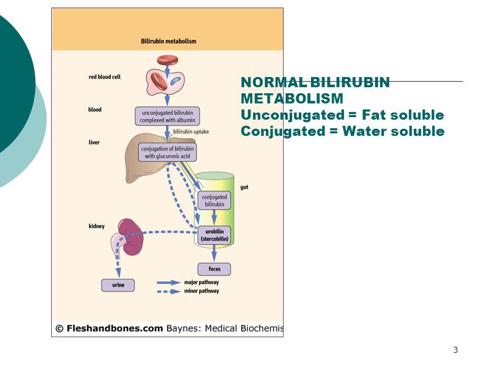 NORMAL BILIRUBIN METABOLISM Unconjugated = Fat soluble Conjugated = Water soluble