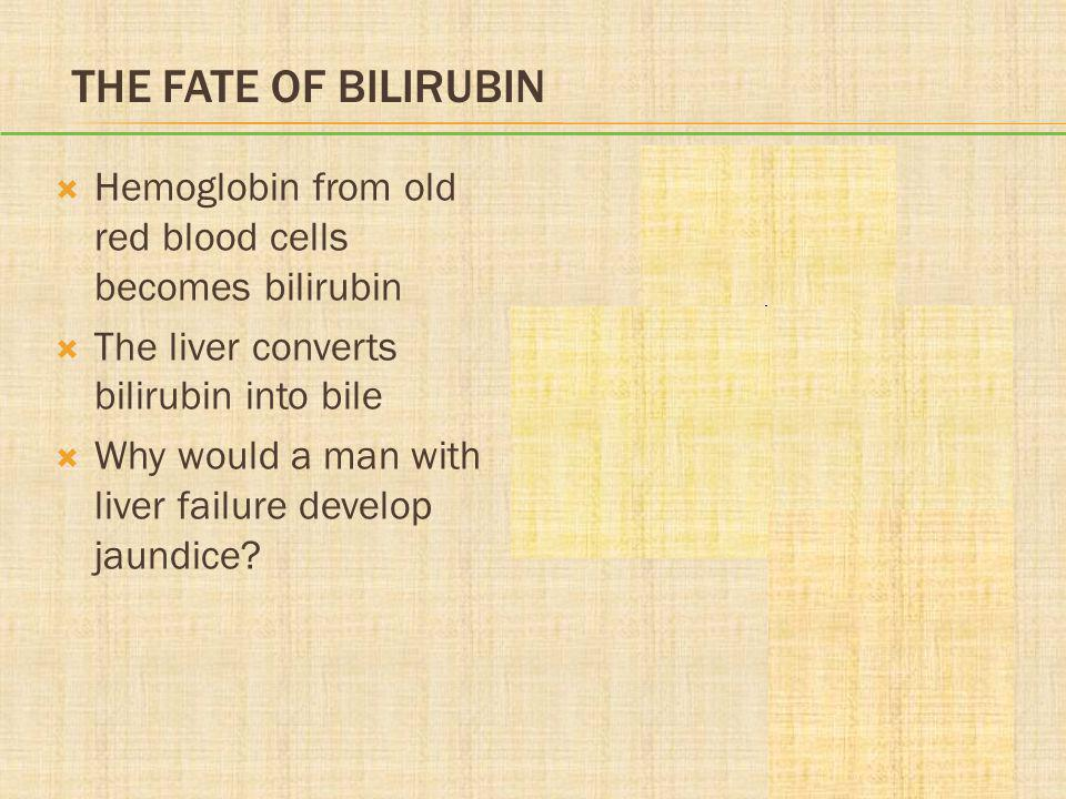 The Fate of Bilirubin Hemoglobin from old red blood cells becomes bilirubin. The liver converts bilirubin into bile.