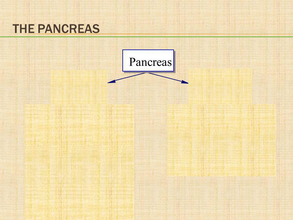 The Pancreas Pancreas Exocrine Endocrine pancreas pancreas