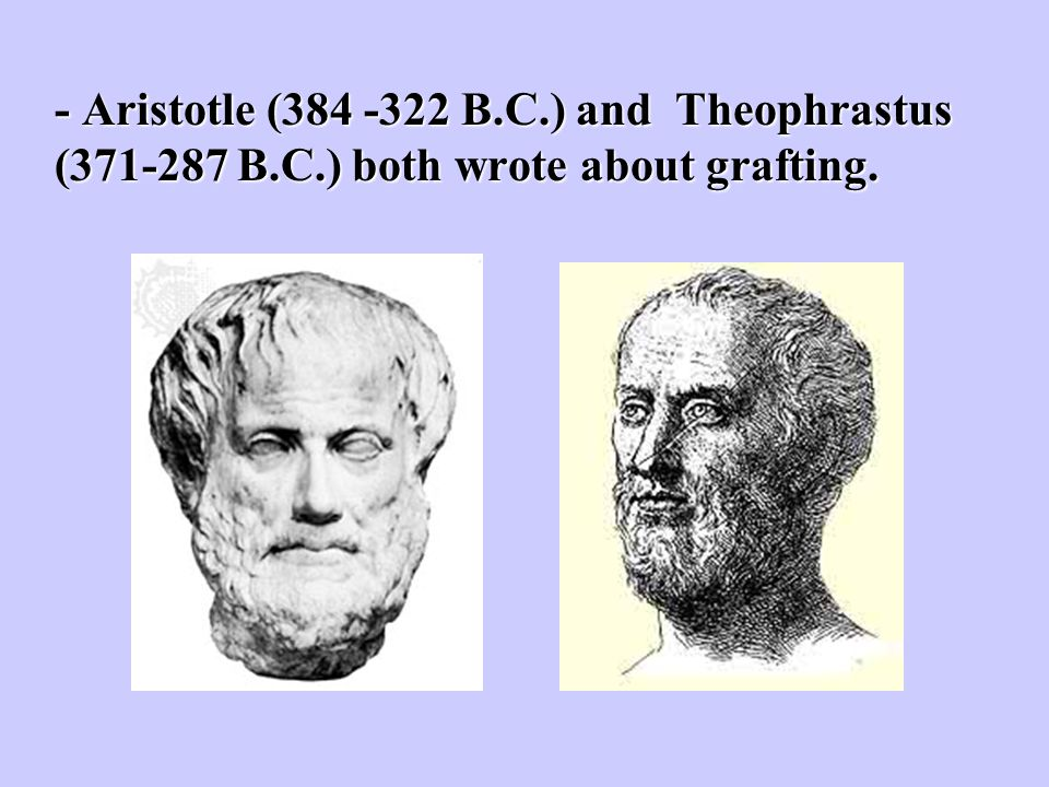 - Aristotle (384 -322 B. C. ) and Theophrastus (371-287 B. C