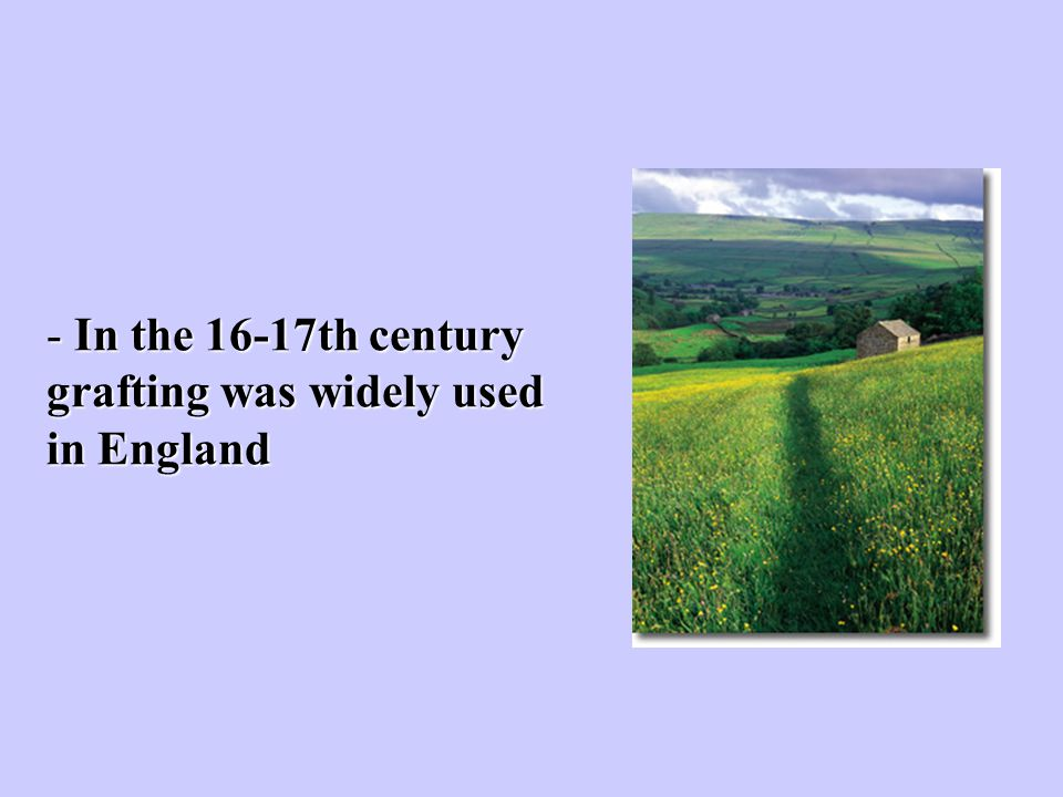 In the 16-17th century grafting was widely used in England