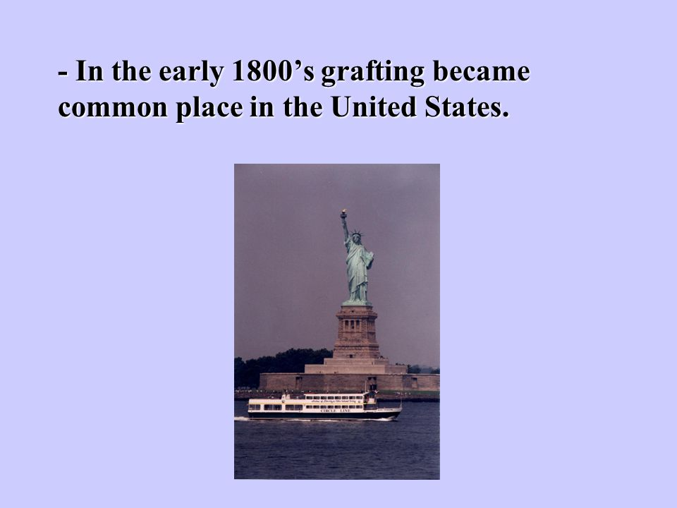 - In the early 1800's grafting became common place in the United States.