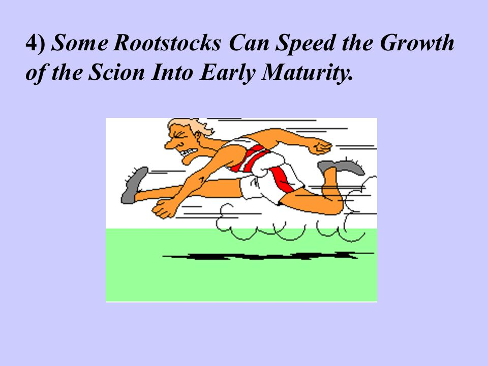 4) Some Rootstocks Can Speed the Growth