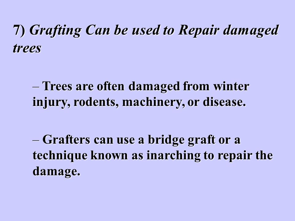7) Grafting Can be used to Repair damaged trees
