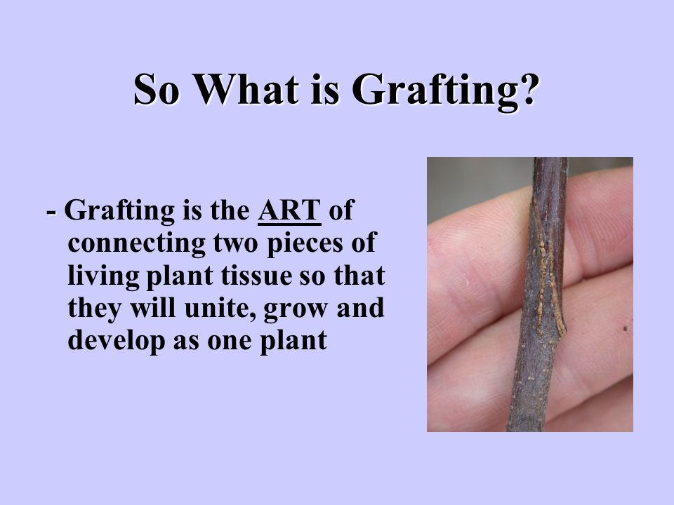 So What is Grafting.