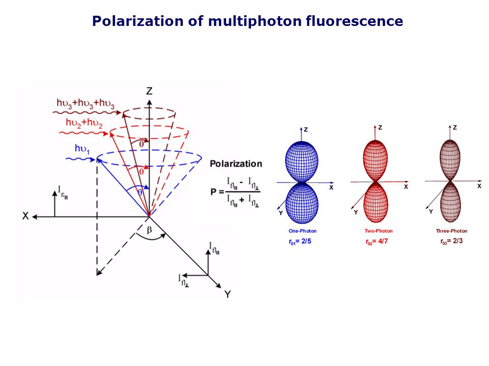 Polarization of multiphoton fluorescence