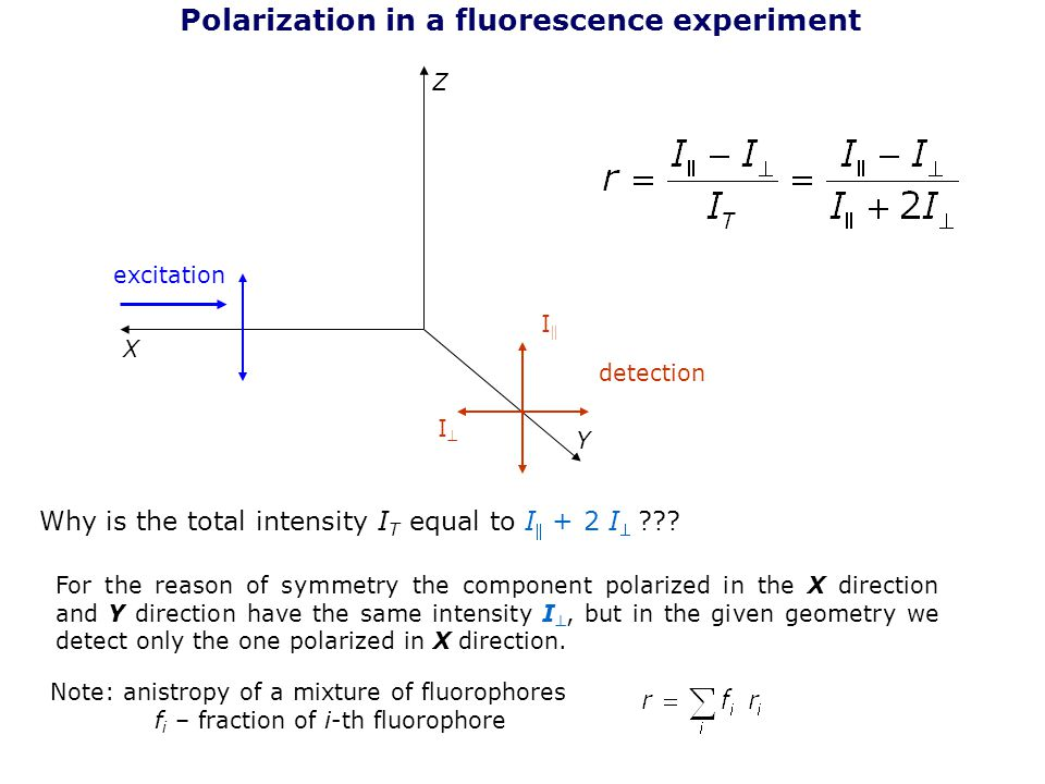 Polarization in a fluorescence experiment