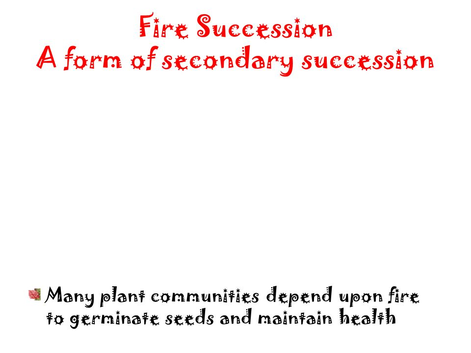 Fire Succession A form of secondary succession
