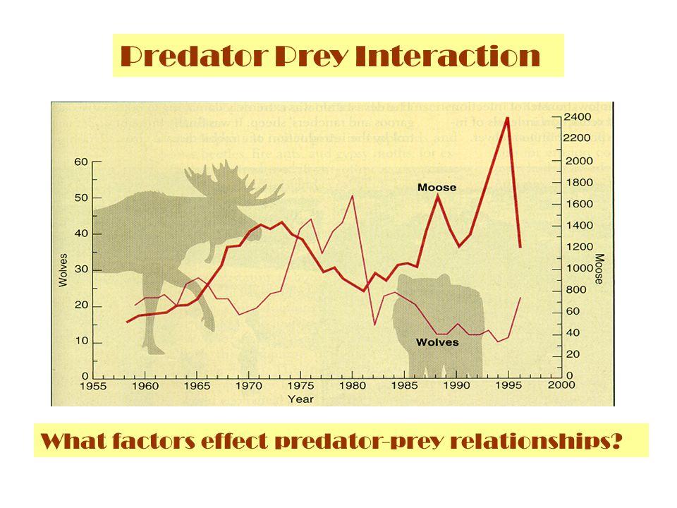 Predator Prey Interaction
