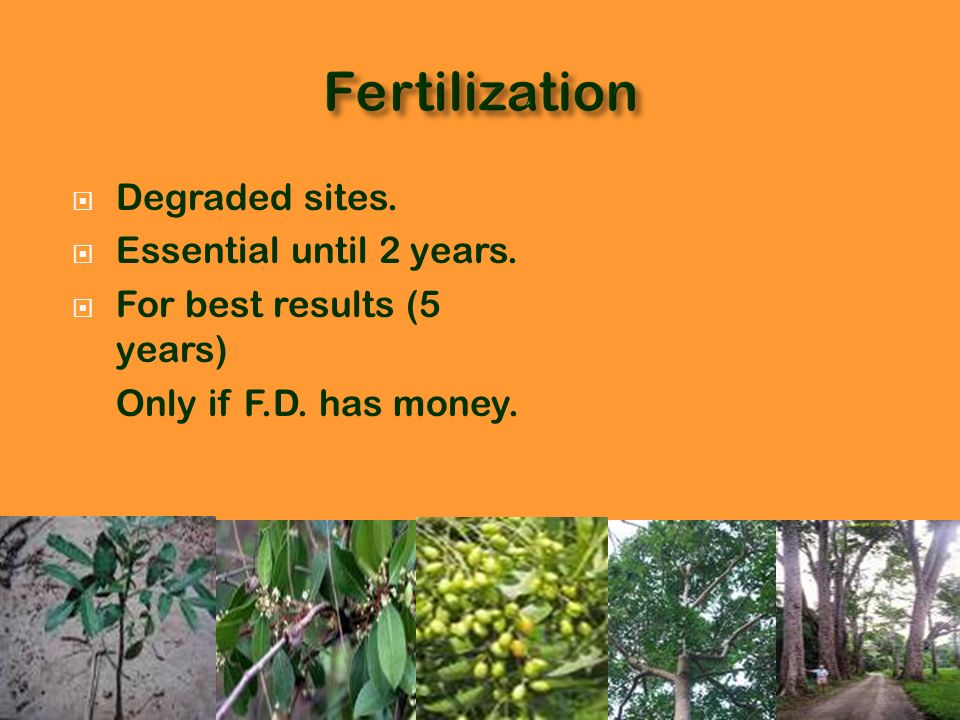 Fertilization Degraded sites. Essential until 2 years.