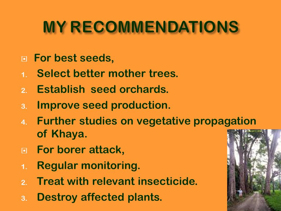 MY RECOMMENDATIONS For best seeds, Select better mother trees.