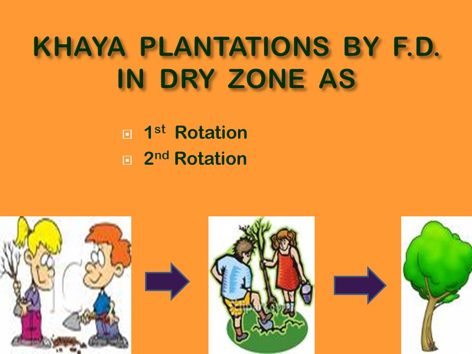 KHAYA PLANTATIONS BY F.D. IN DRY ZONE AS