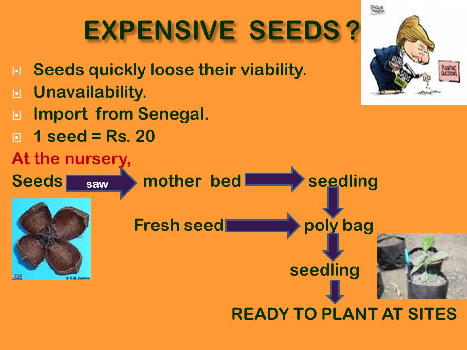EXPENSIVE SEEDS Seeds quickly loose their viability. Unavailability.