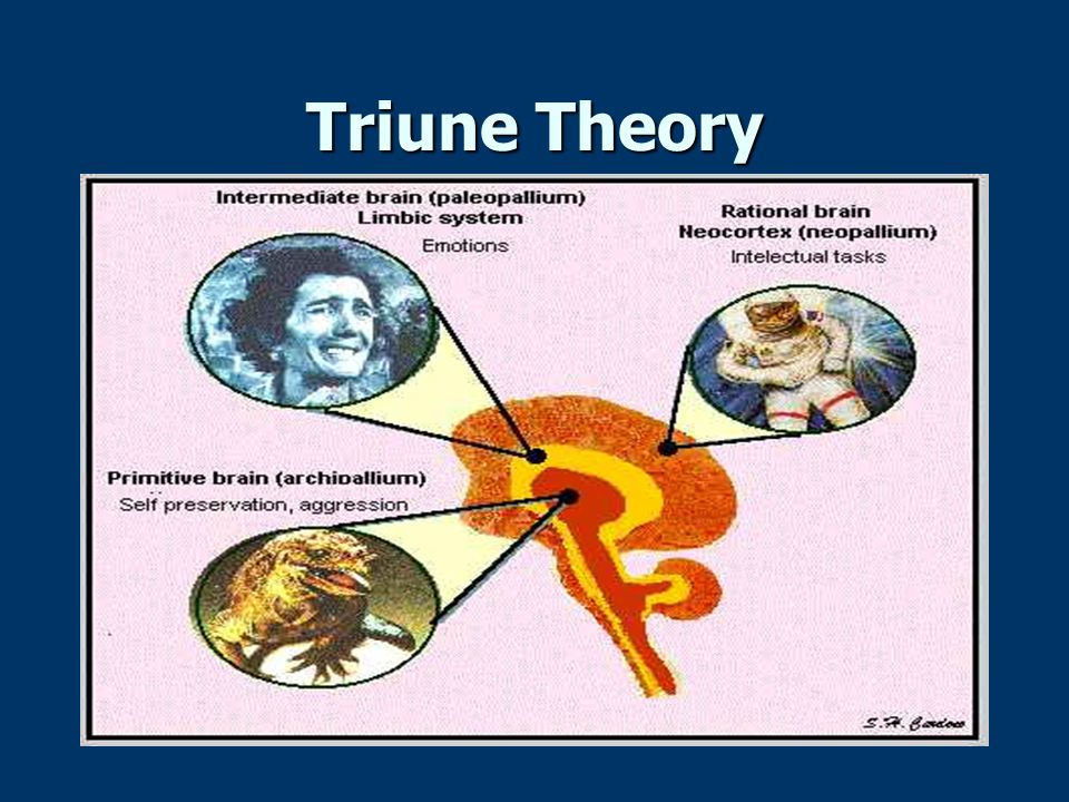 Triune Theory