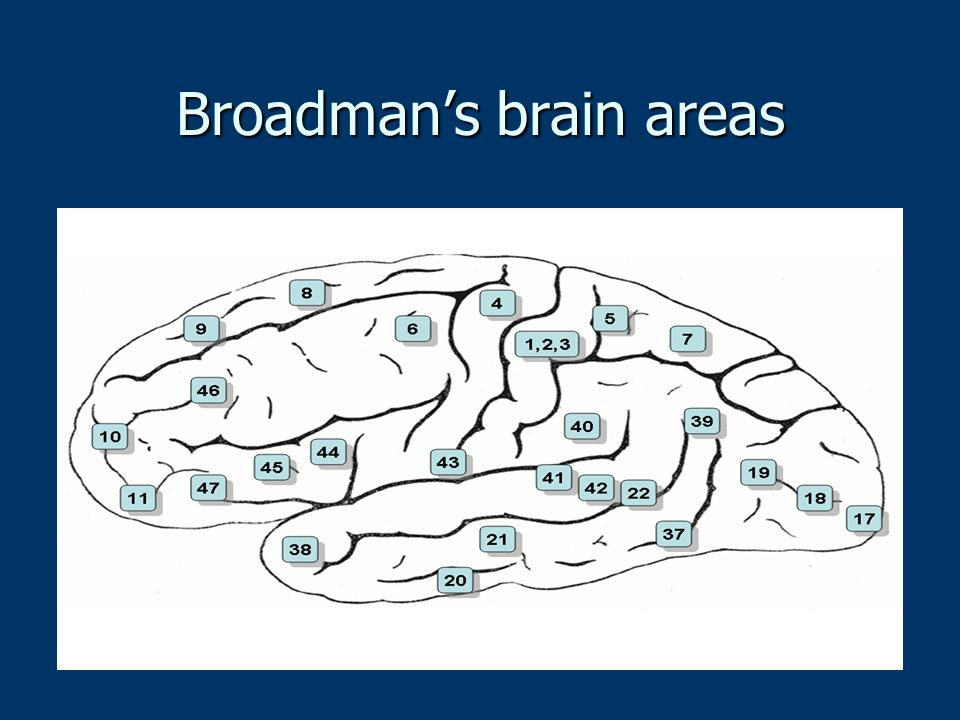 Broadman's brain areas