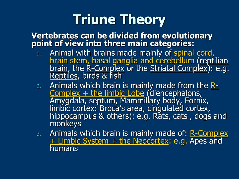 Triune Theory Vertebrates can be divided from evolutionary point of view into three main categories: