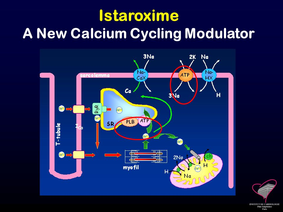 A New Calcium Cycling Modulator