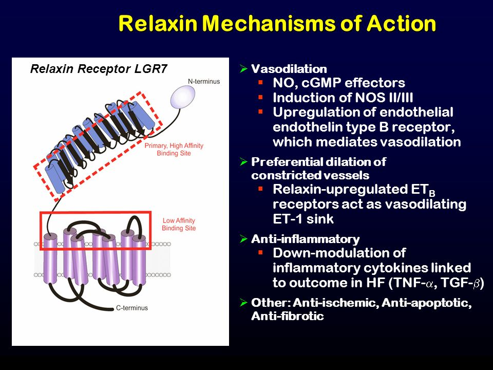 Relaxin Mechanisms of Action