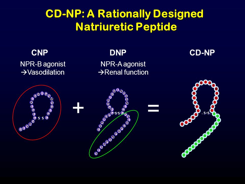 CD-NP: A Rationally Designed Natriuretic Peptide