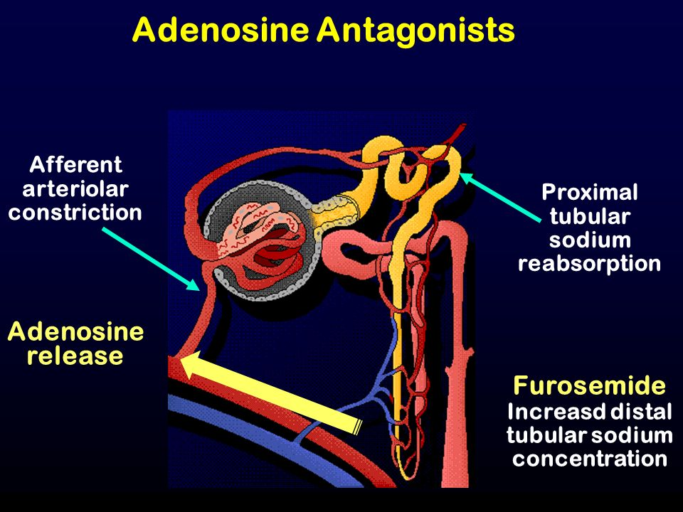 Adenosine Antagonists