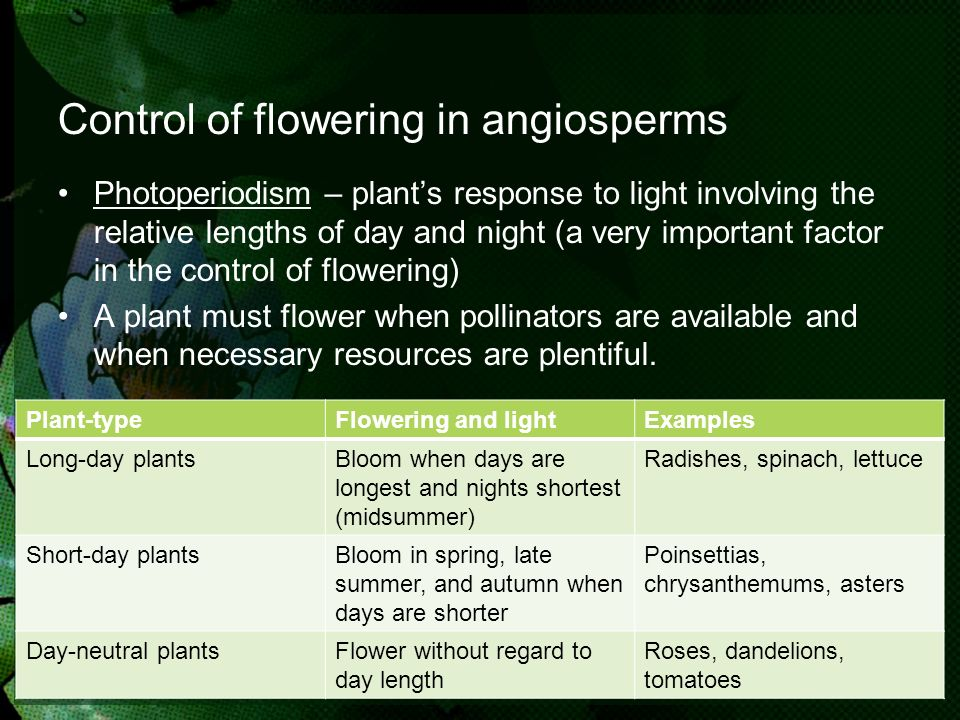 Control of flowering in angiosperms