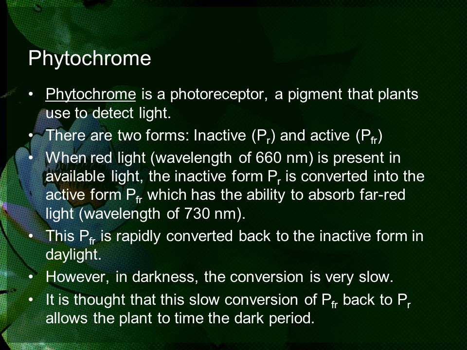 PhytochromePhytochrome is a photoreceptor, a pigment that plants use to detect light. There are two forms: Inactive (Pr) and active (Pfr)