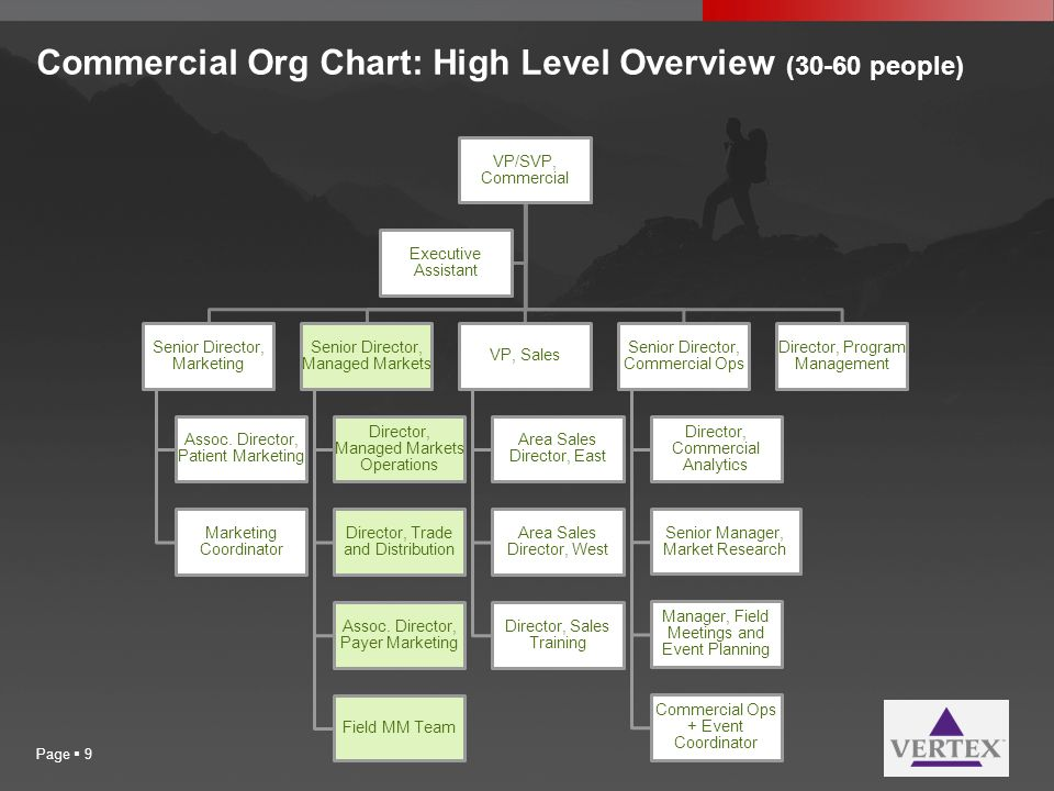 Commercial Org Chart: High Level Overview (30-60 people)