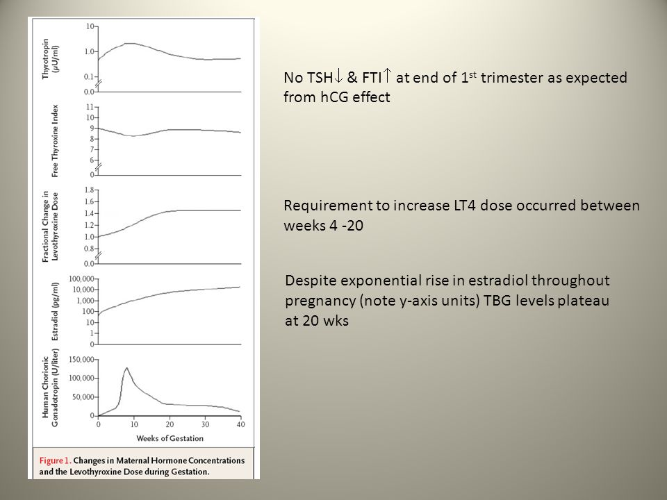 No TSH & FTI at end of 1st trimester as expected from hCG effect