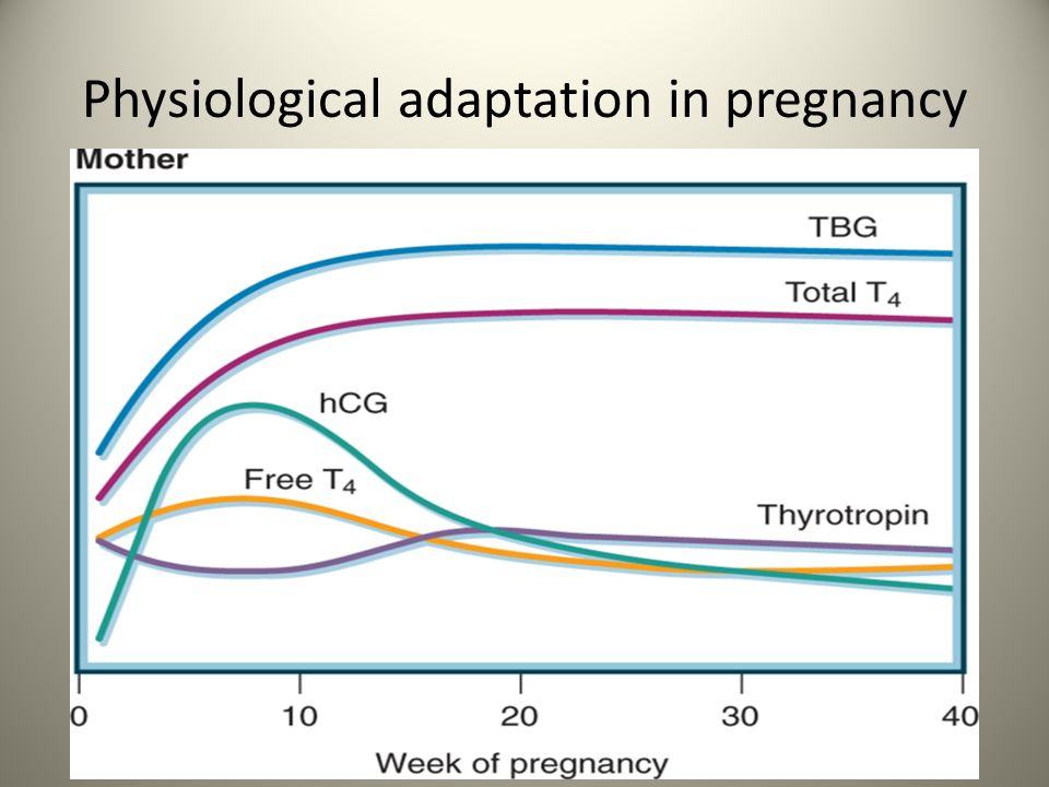 Physiological adaptation in pregnancy