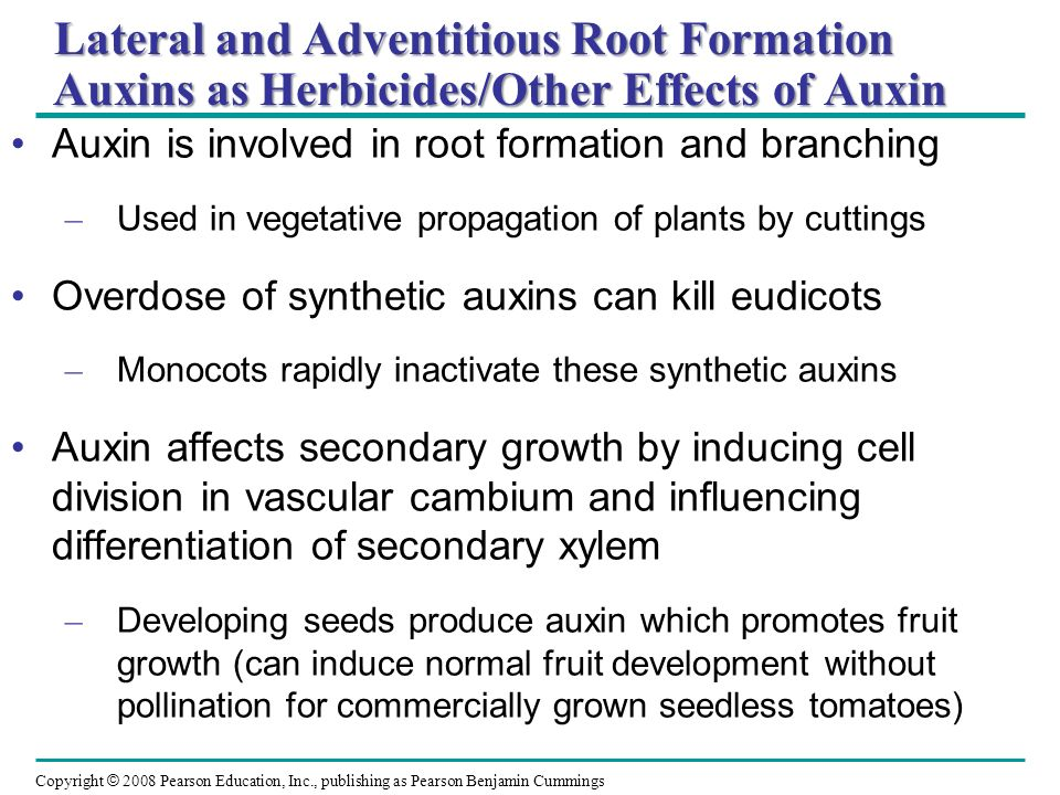 Lateral and Adventitious Root Formation Auxins as Herbicides/Other Effects of Auxin