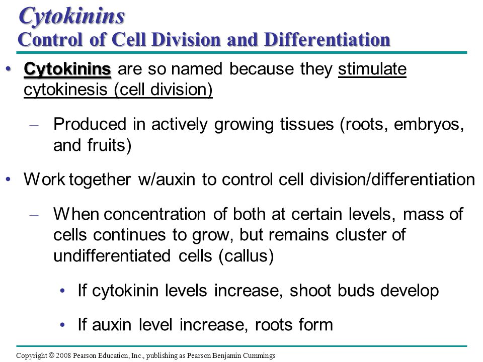 Cytokinins Control of Cell Division and Differentiation
