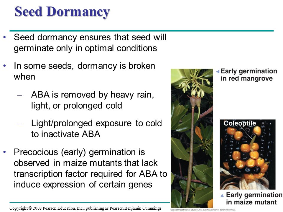 Seed Dormancy Seed dormancy ensures that seed will germinate only in optimal conditions. In some seeds, dormancy is broken when.
