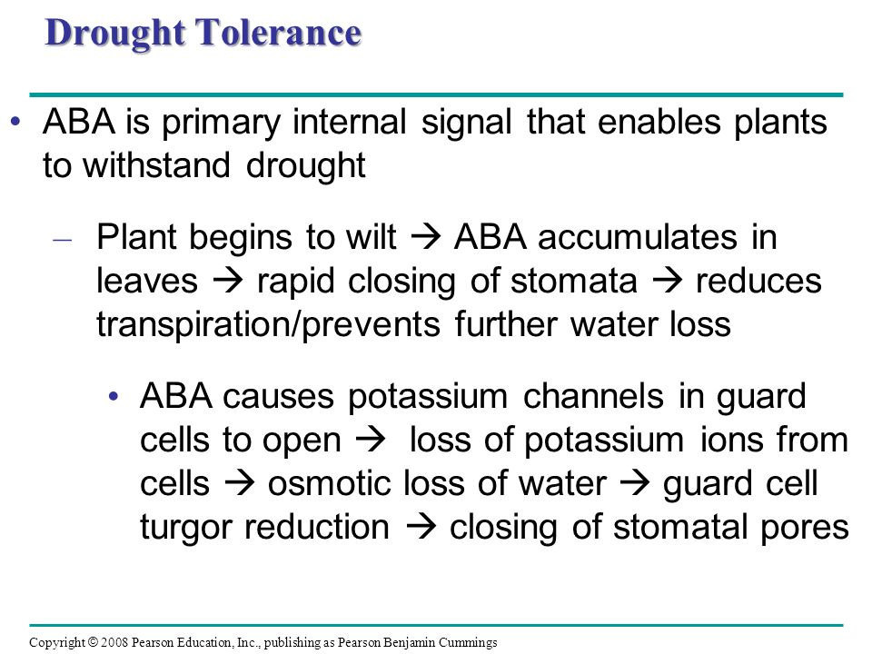 Drought Tolerance ABA is primary internal signal that enables plants to withstand drought.