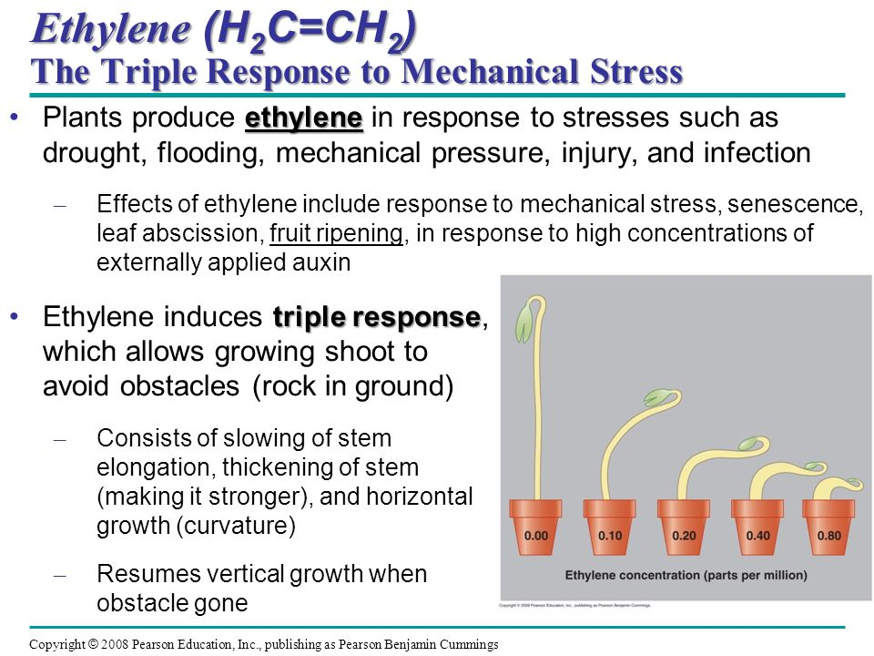 Ethylene (H2C=CH2) The Triple Response to Mechanical Stress