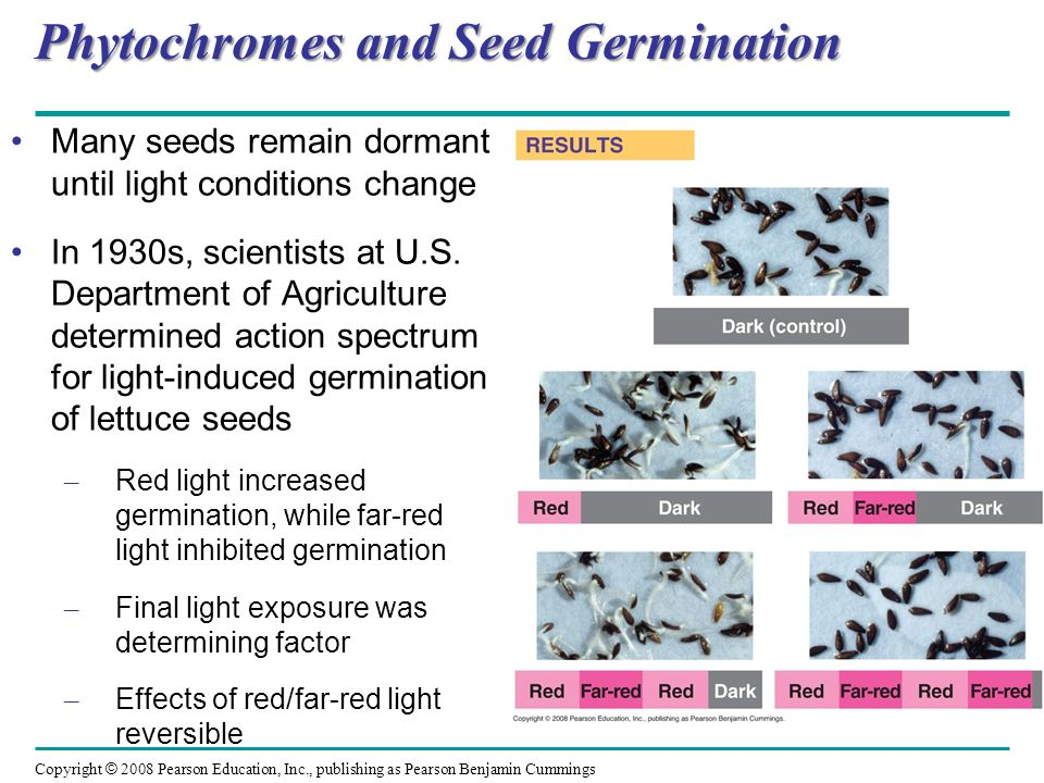 Phytochromes and Seed Germination