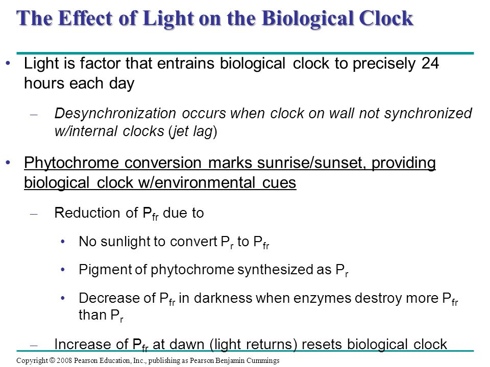 The Effect of Light on the Biological Clock