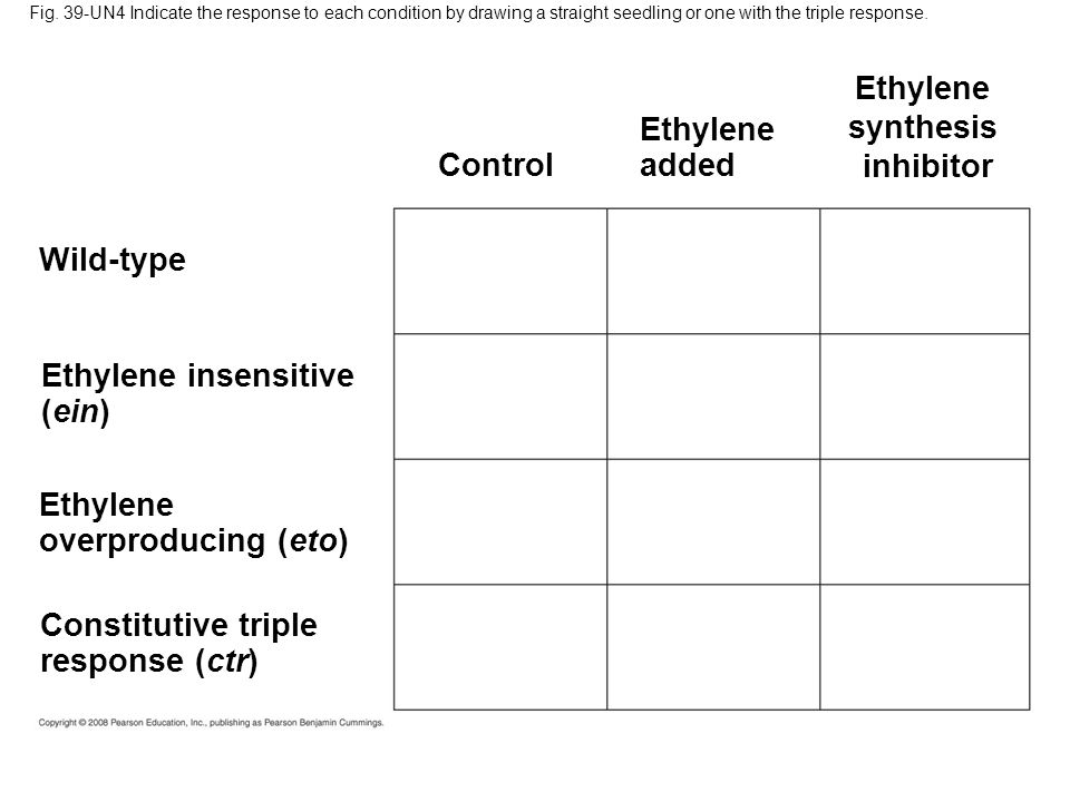 Ethylene synthesis inhibitor