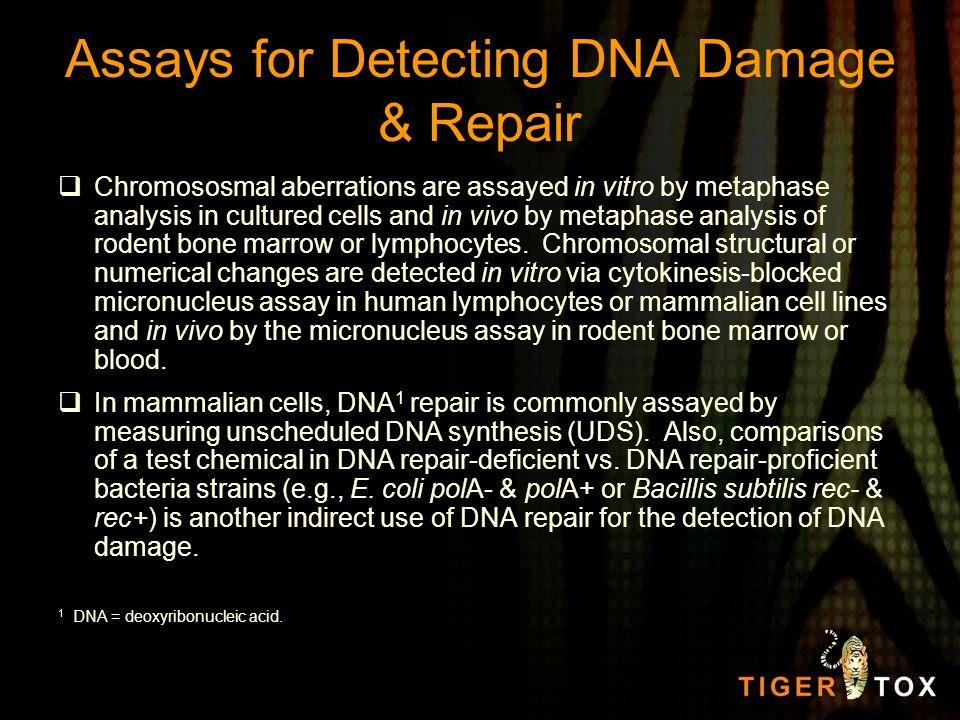 Assays for Detecting DNA Damage & Repair