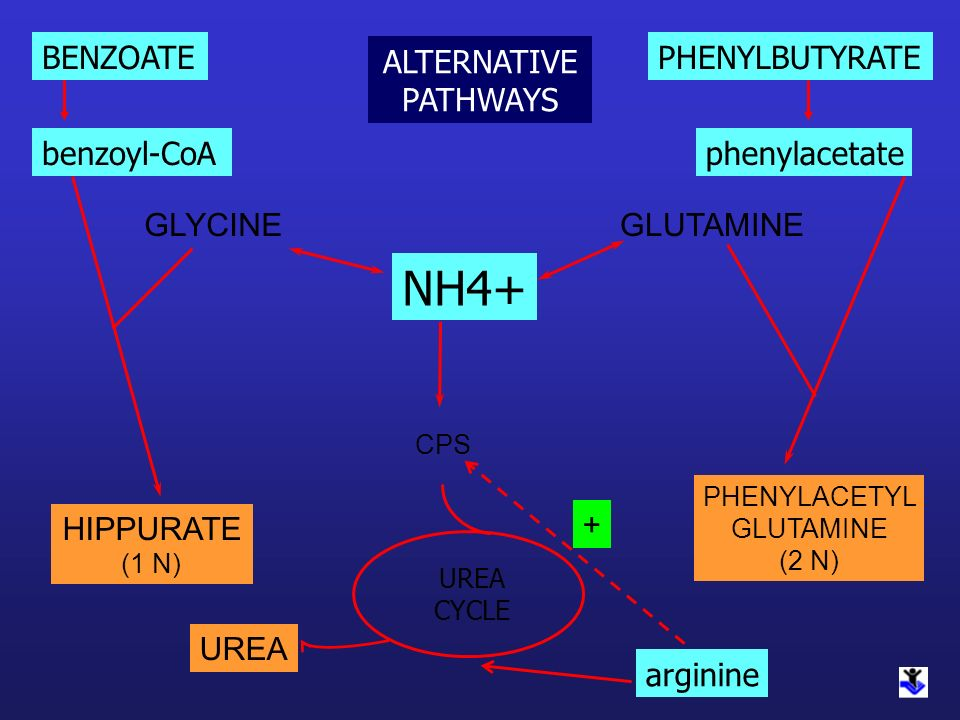 NH4+ BENZOATE ALTERNATIVE PATHWAYS PHENYLBUTYRATE benzoyl-CoA