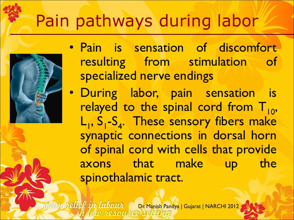 Pain pathways during labor