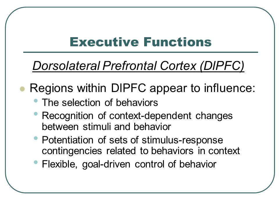 Dorsolateral Prefrontal Cortex (DlPFC)