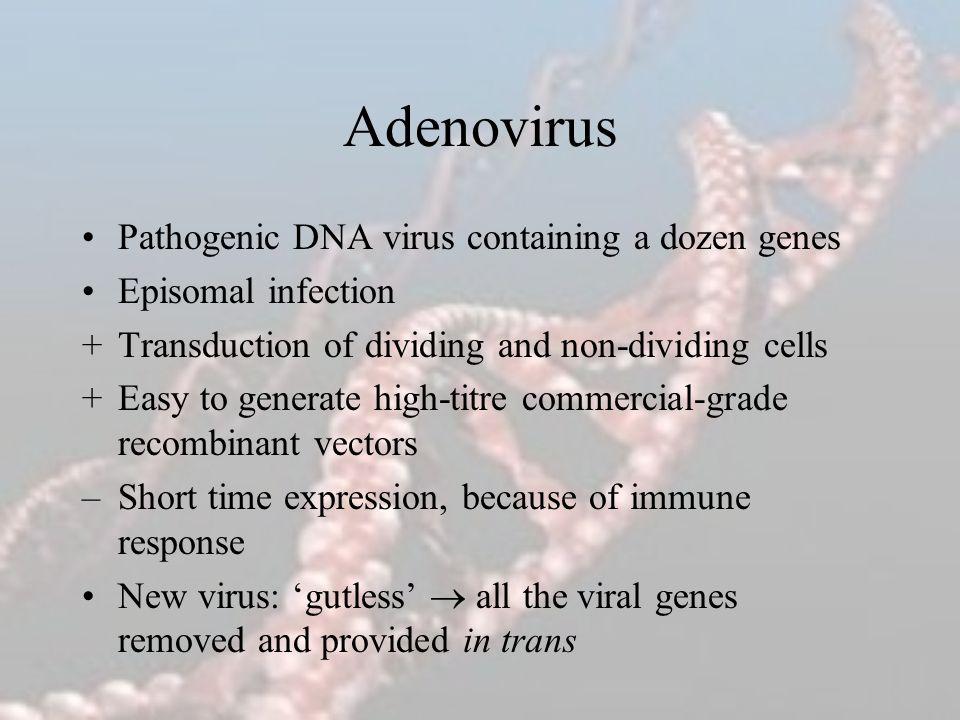 Adenovirus Pathogenic DNA virus containing a dozen genes